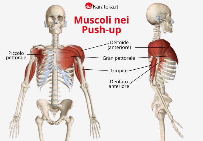 quali-muscoli-allenano-flessioni